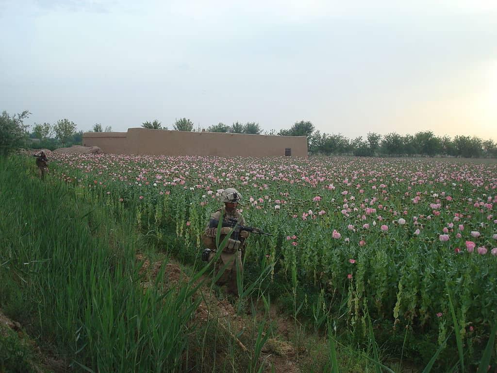 1024px-Marines_in_poppy_fields