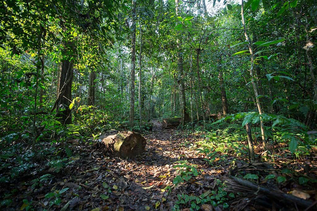 1024px-Path_in_the_rainforest