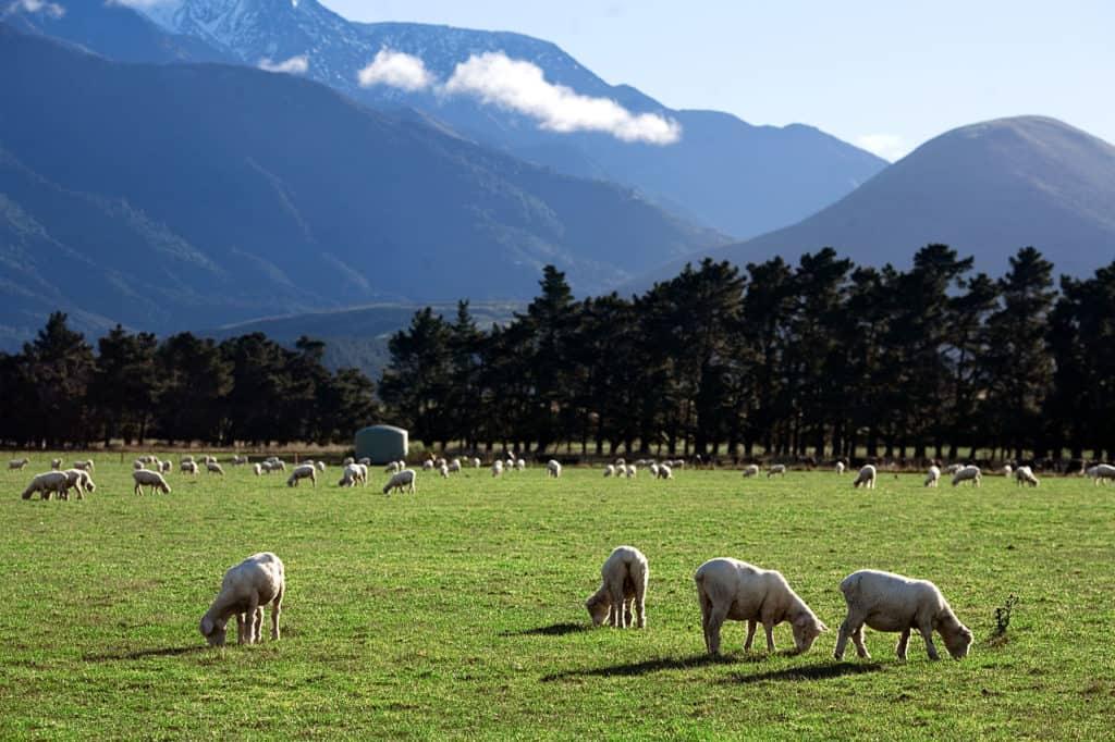 1280px-New_Zealand_-_Rural_landscape_-_9795