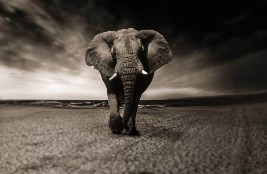MaxPixel.freegreatpicture.com-Elephant-Africa-Black-And-White-Safari-Animal-2870777-1