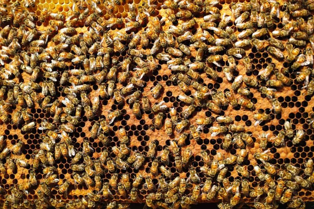 bees-809328_1280