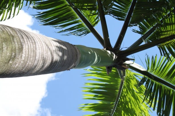 palm-tree-from-the-bottom-up