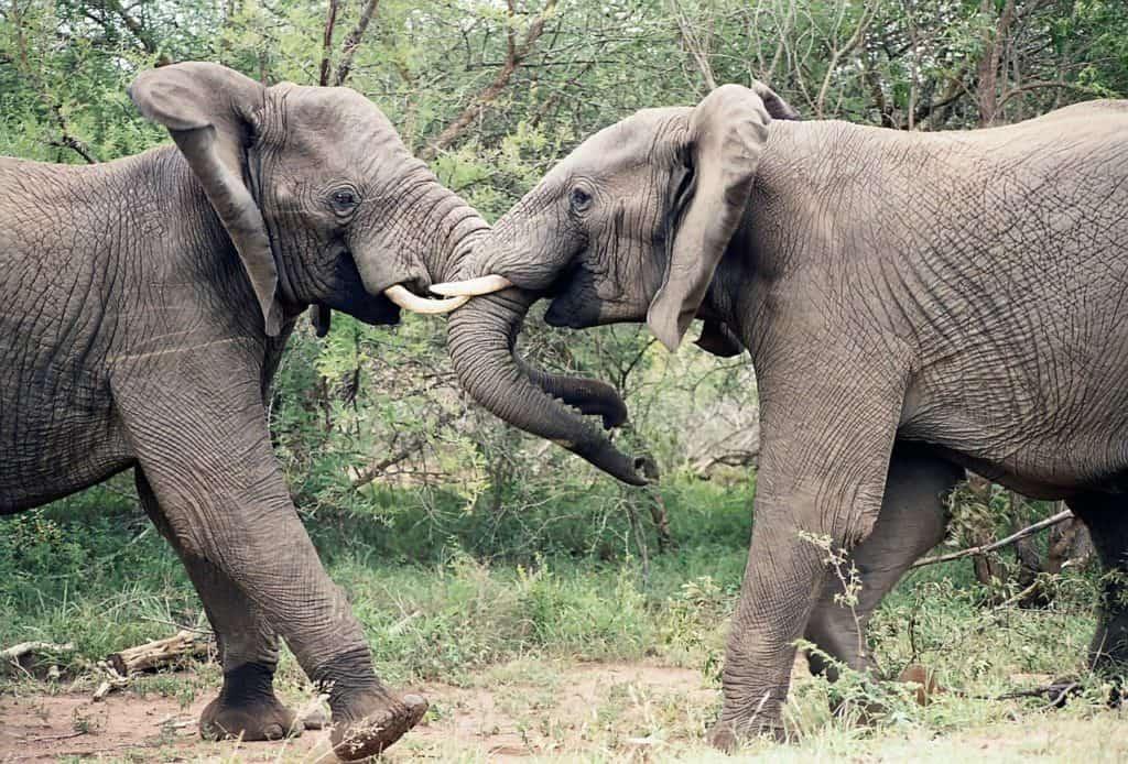 elephants-1355424_1280