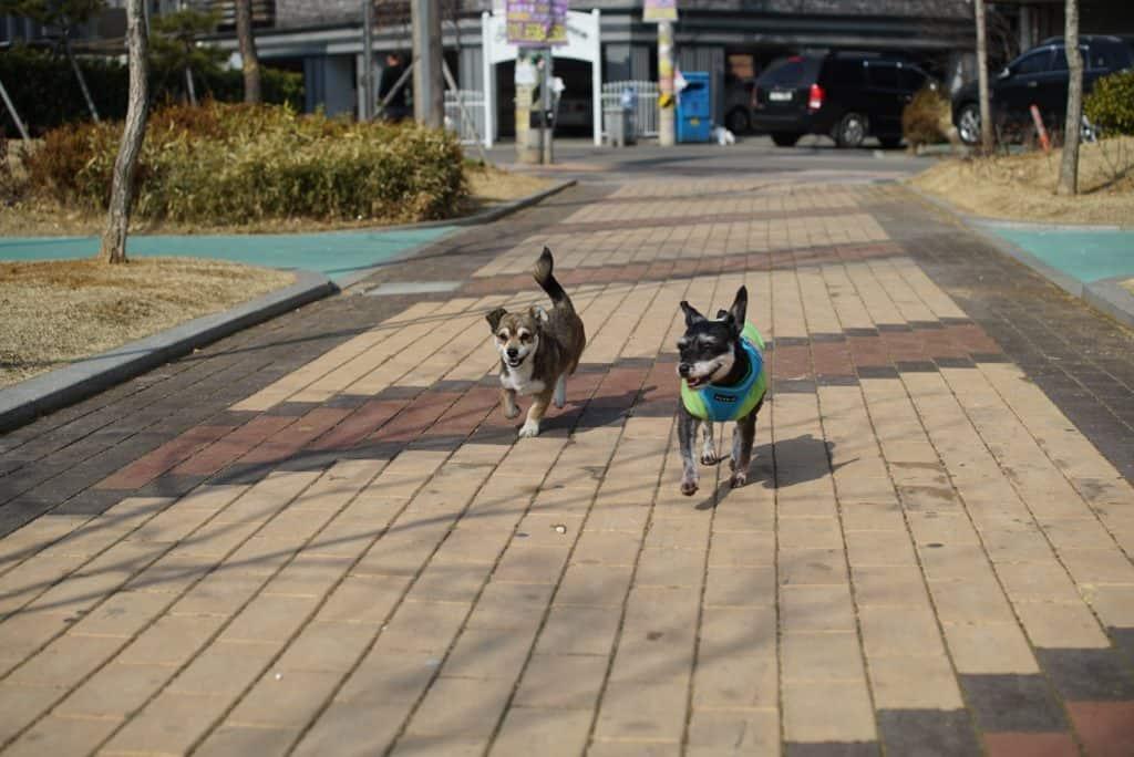 outdoor-pedestrian-sidewalk-city-puppy-dog-751568-pxhere.com